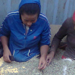Fair Trade but not fair price for coffee farmers in Ethiopia