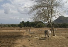 Agricultural prices during drought in Ethiopia: An updated assessment using national producer data (January 2014 to June 2016