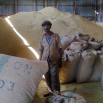 Ethiopia's coffee farmers struggle to realize benefits from international markets