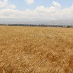 The state and contribution of extension services to agricultural productivity in Ethiopia