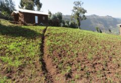 The state of agricultural extension services in Ethiopia and their contribution to agricultural productivity
